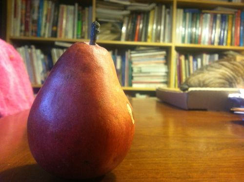 Red d'anjou pear by meredith murphy