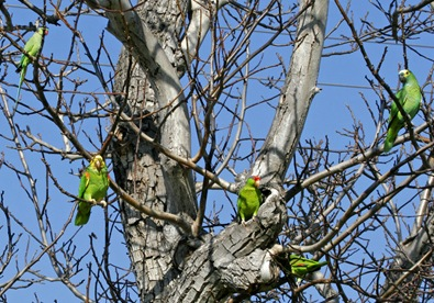 Flock of parrots